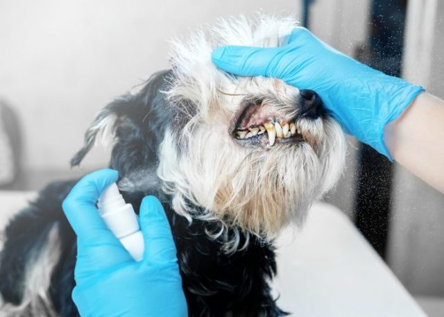20 Reasons Why Your Dog Won't Eat or Drink: 12. Your Dog Has a Toothache