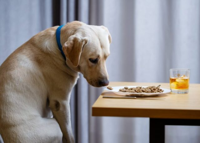 20 Reasons Why Your Dog Won't Eat or Drink: 14. Broken Regular Habits