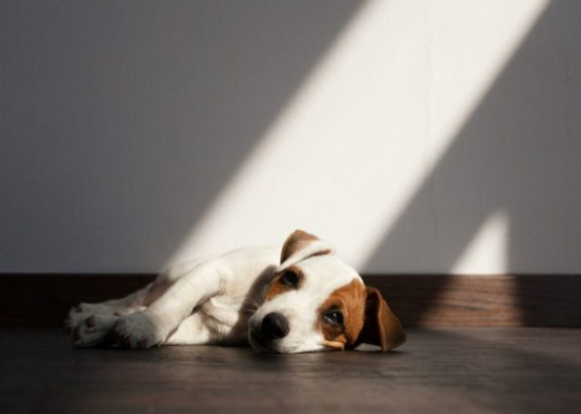 20 Reasons Why Your Dog Won't Eat or Drink: 16. Depression