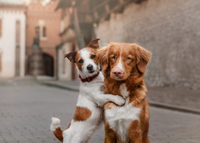 Guidelines and Tips You Can Follow For Your Multi-Dog Household
