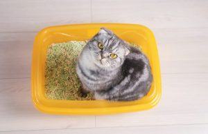 Litter Training Your New Kitten Or Cat: A Comprehensive Guide