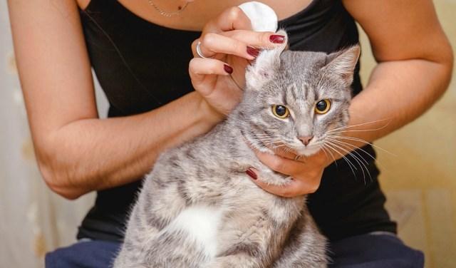 Grooming Cat Ears