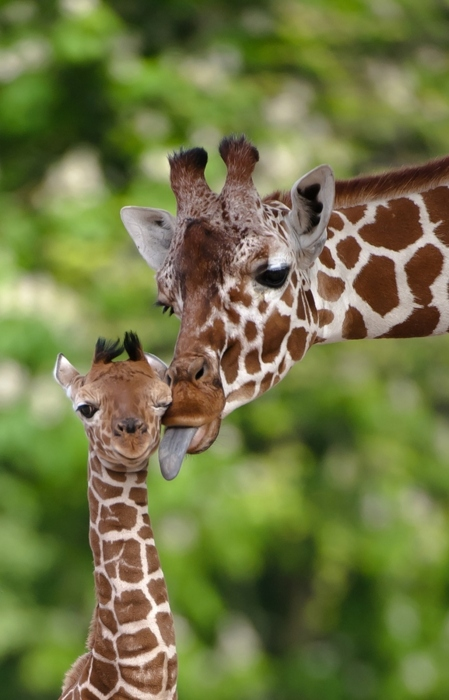 38 Obnoxiously Adorable Baby Animals That Will Make You Overdose On Cuteness