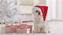 perro navidad