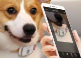 Uso de app Xiaomi Peer Dog Locator
