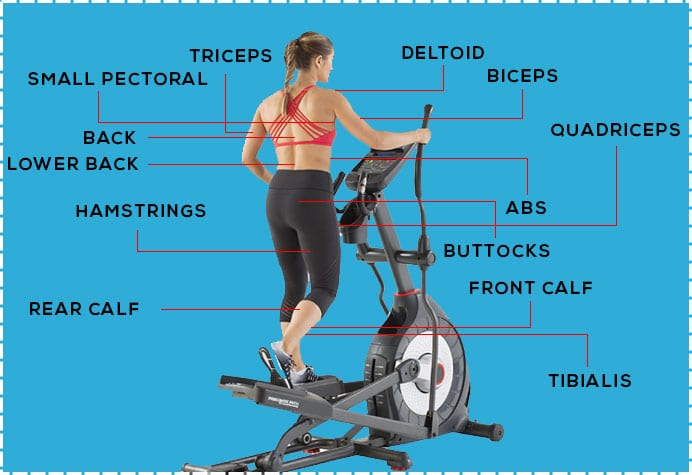 What Muscles Does the Elliptical Machine Work? 12 Benefits ...