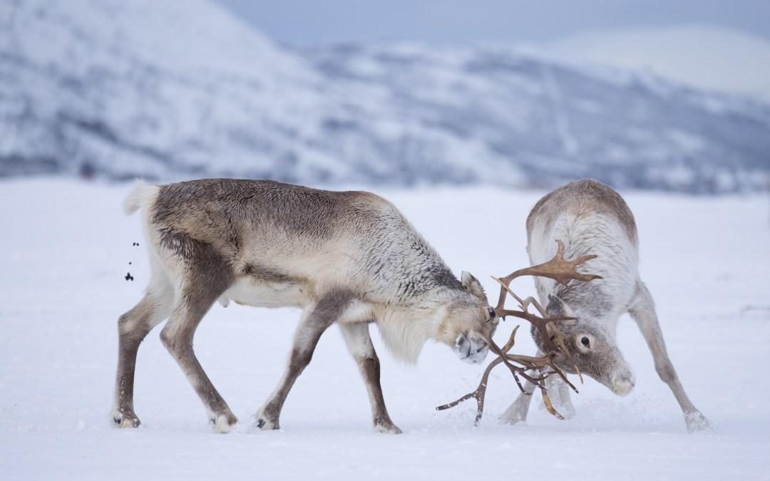 Fotoreis Tromso noorderlicht