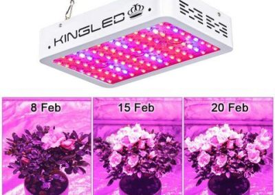 King Plus 1000w LED Grow Light 2