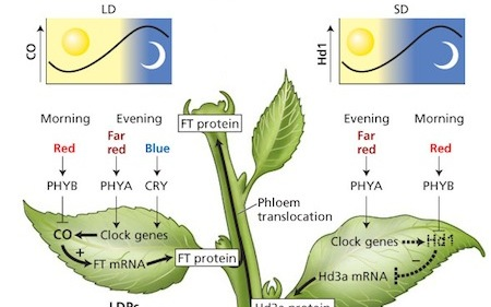 Light Cycles For Growing Cannabis [How Light Cycles Works]