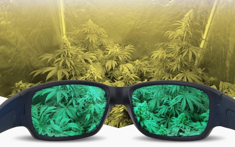 best grow light glasses