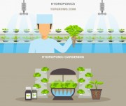 Organic or hydroponic cultivation when growing Cannabis?