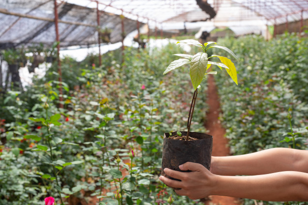 soilgrowing