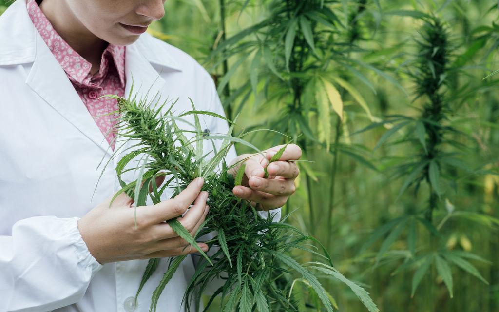3 Characteristics of Nature that Make a Healthy Hemp Plant
