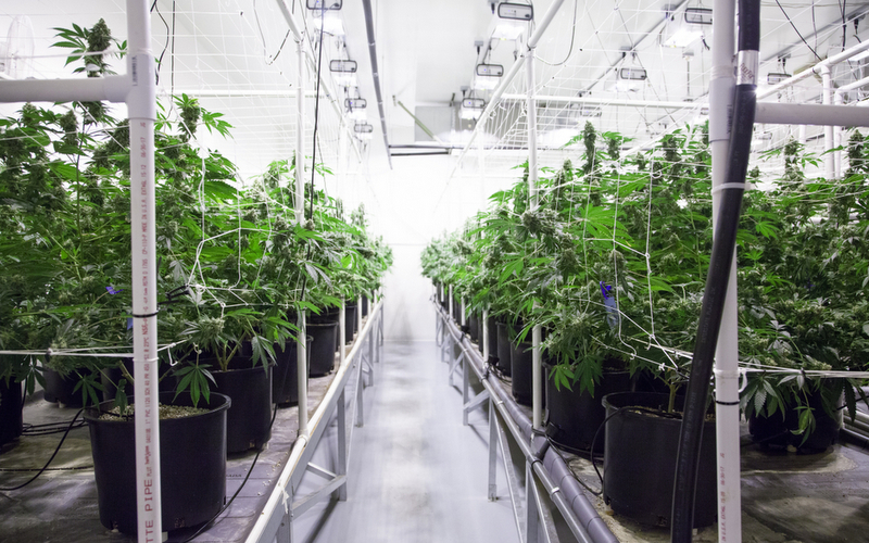 grow room with solar panel