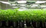 ¿Thinking in using solar panels for your grow room?