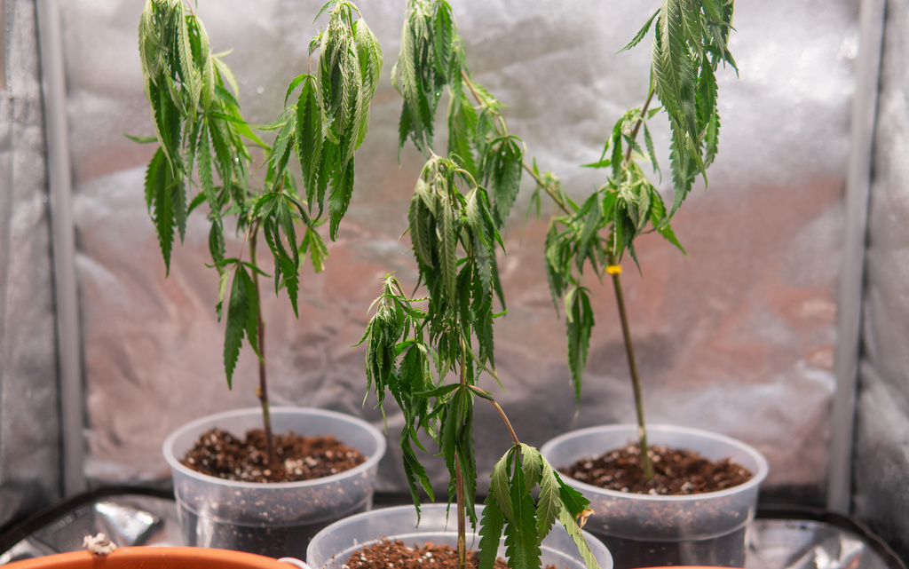 grow room ventilation guide