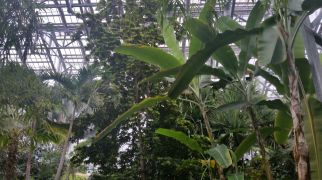View upward from the floor of the glass house, plants everywhere.