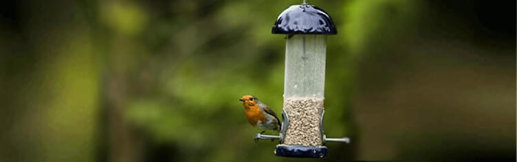 What type of Bird Feeders should I choose for the Cardinals?