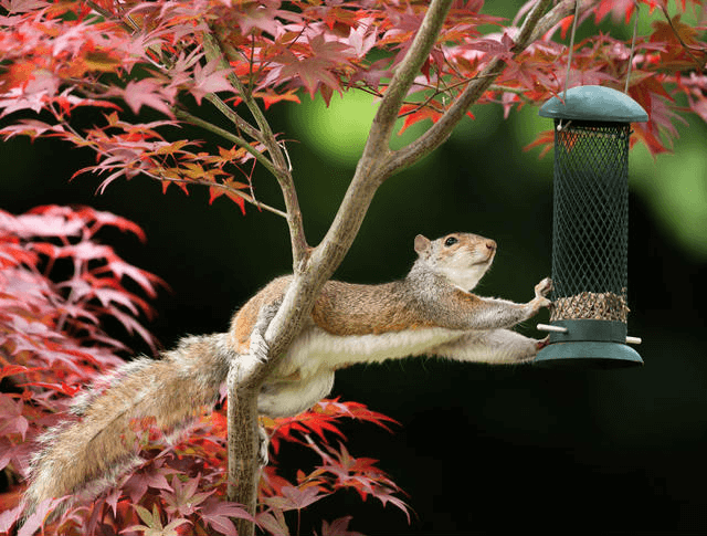 Anti-squirrel feeders