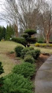 topiary-20180305-1751501
