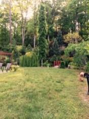 topiary-IMG-2685