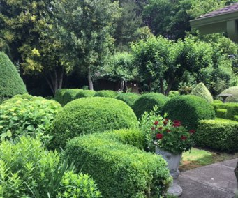 Elegant boxwoods and hydrangeas for a creative mature garden