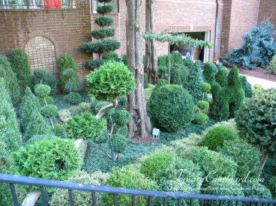 topiary-courtyard-product-w24