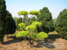 topiary-courtyard-product-w26