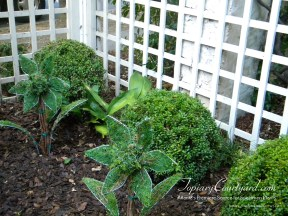 topiary-courtyard-product-w54
