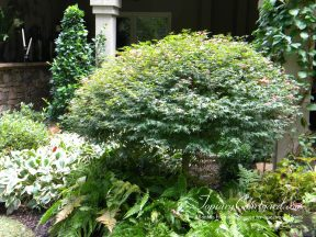 topiary-courtyard-product-w58