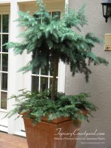 topiary-courtyard-product-w62