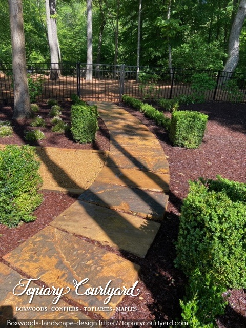 Boxwoods in a landscape design
