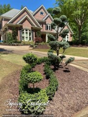 Boxwoods and picea