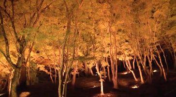 香嵐渓 ライトアップ2