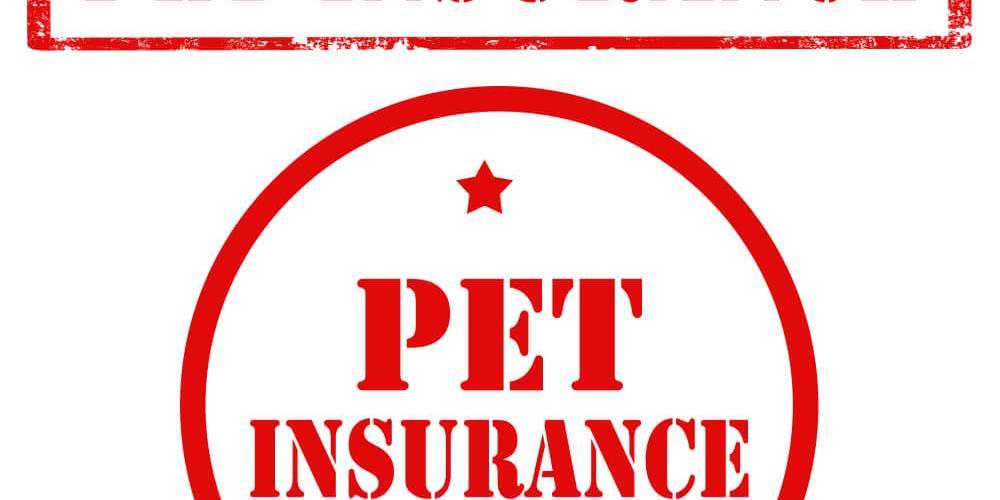 Pet Insurance in New York