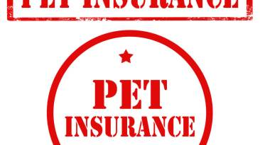 Pet Insurance in New York