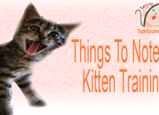 Things To Note In Kitten Training