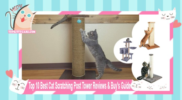 Top 10 Best Cat Scratching Post Tower Reviews & Buy's Guide