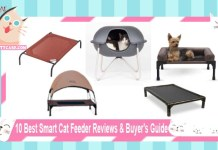 10 Best Raised Cat Bed Reviews & Buyer's Guide