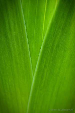 Luminescent green