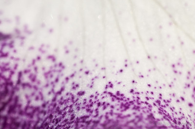 Splashes of purple