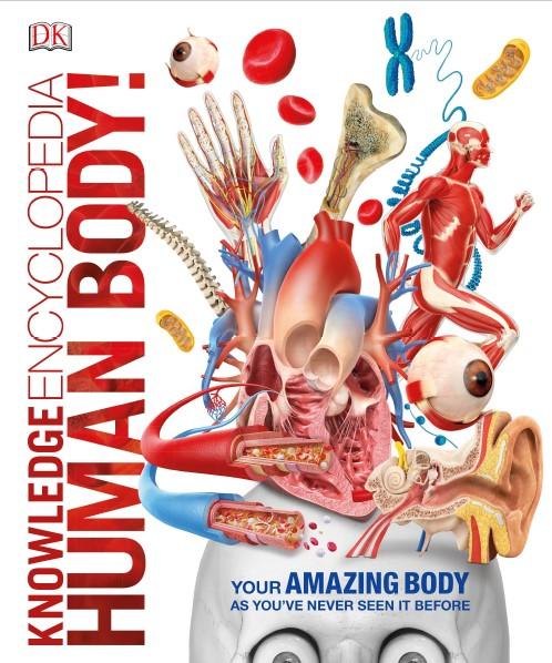 Knowledge encyclopedia human body pdf