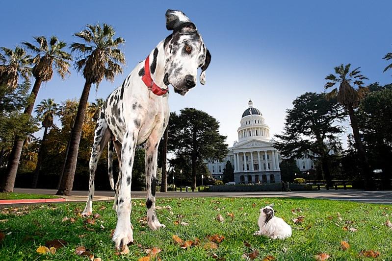 Anjing tertinggi (anjing Jerman) dan anjing terkecil (Chihuahua)
