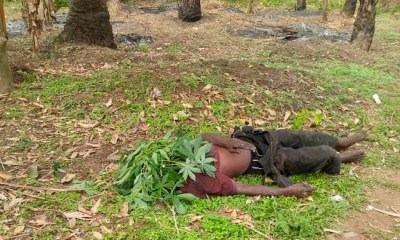 Armed bandits attack Ebonyi communities, hack many to death [GRAPHIC PHOTOS]-TopNaija.ng