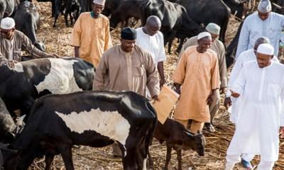 Buhari-checking-his-cows-used-to-illustrate-this-story-Credit-TopNaija
