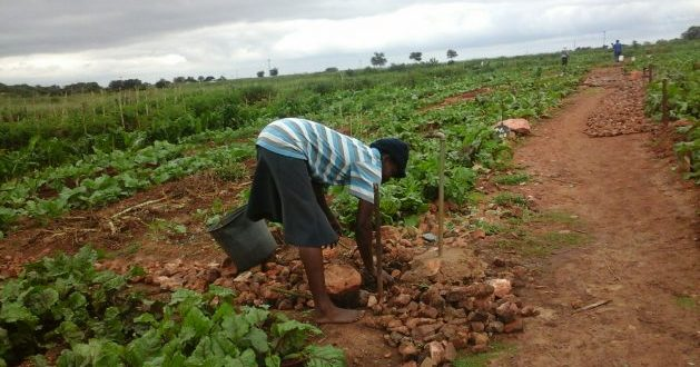 To Reverse Food Insecurity Build a Climate Resilient Agricultural Sector
