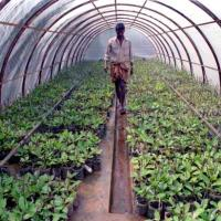 GREEN HOUSE FARMING IN PHILIPPINE URBAN CITIES