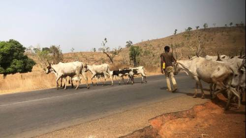 Fulani Herdsmen Stab Each Other Over Cows In Owerri