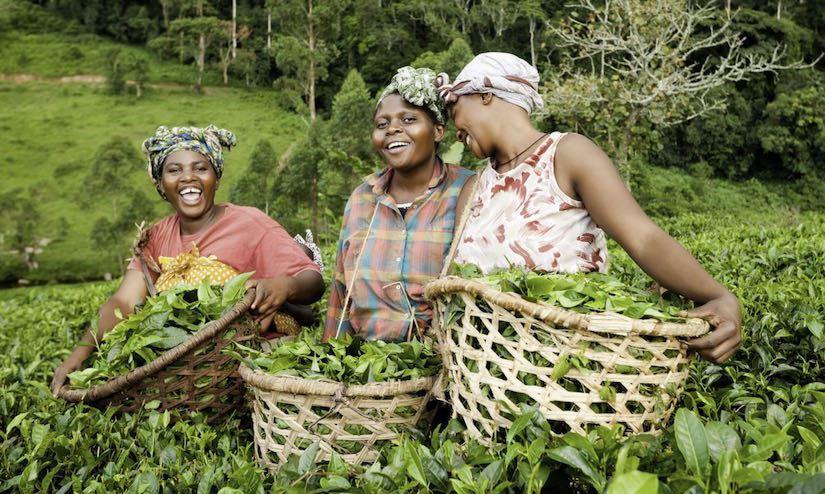 Agrichainx : Democratizing Agriculture Data using Blockchain