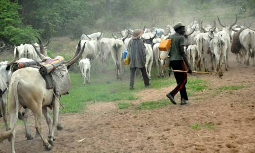 How herdsmen invaded Ogun community to destroy and kill [Topnewstv Special Report]